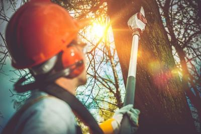Deadwood Cutting with our Tree Surgeon in Canterbury