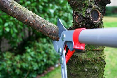 Garden Maintenance with our Tree Surgeon in Canterbury