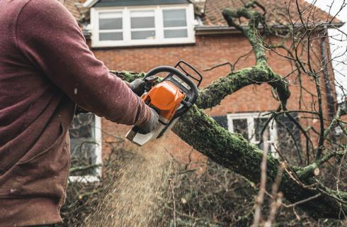 Tree Surgeon in Canterbury, Dead Wood Cutting