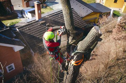 Tree removal with our Tree Surgeon in Canterbury